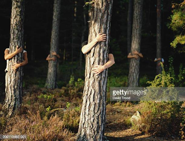 five men embracing trees in forest - tree hugging stock pictures, royalty-free photos & images