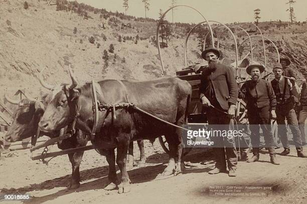 Five men standing next to a wagon pulled by oxen
