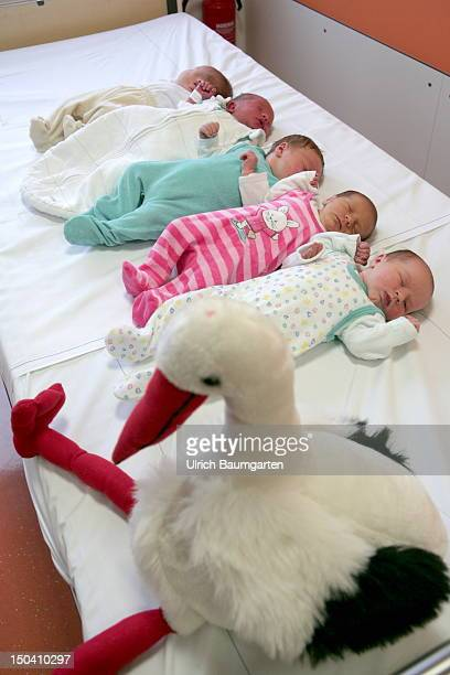 Five newborn babies and a plush stork in a row in the Asklepios Children's Hospital on July 13 2012 in St Augustin Germany