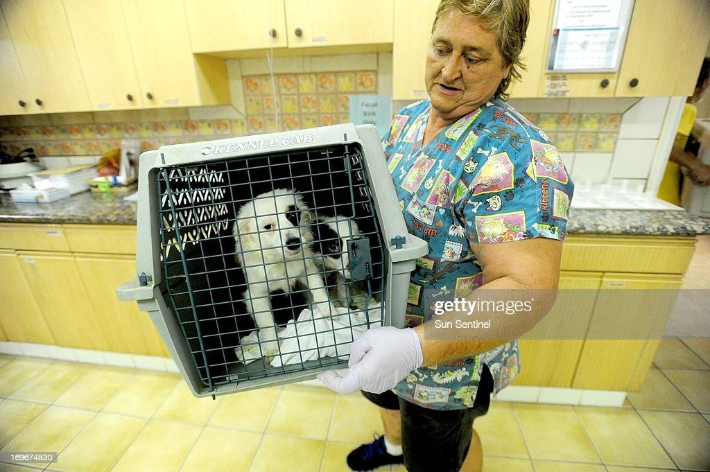 Pet rescue : News Photo