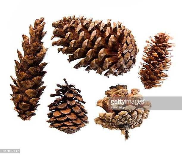 Five pinecones on white