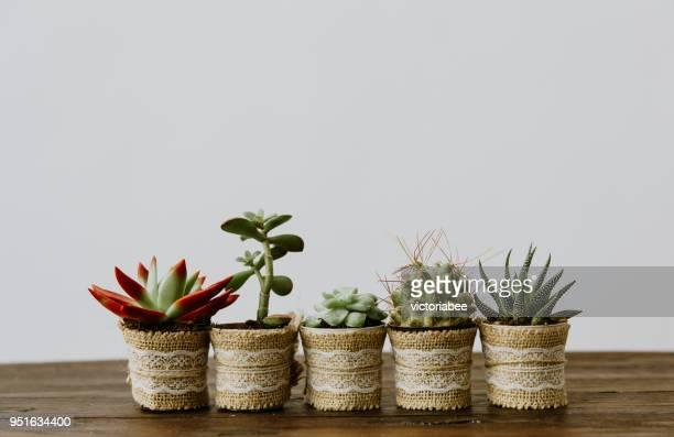 five plants in a row - cinco objetos - fotografias e filmes do acervo