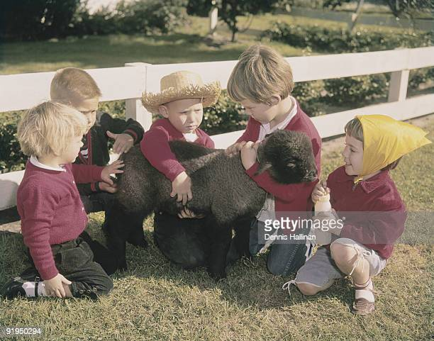 Five small children playing with baby black lamb