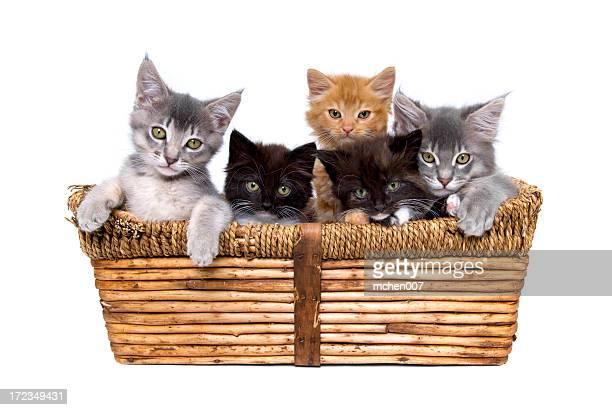 Five small kittens in a wicker basket