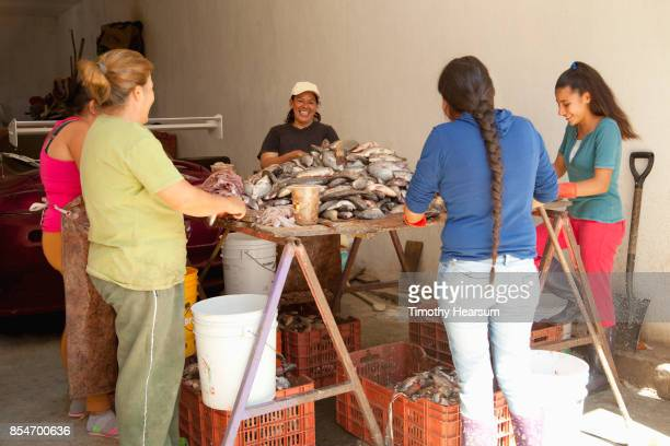 five women work to clean a pile of fresh fish on a makeshift table in a garage - timothy hearsum stock pictures, royalty-free photos & images