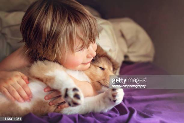 five year old boy cuddling rough collie puppy in bed - collie stock photos and pictures