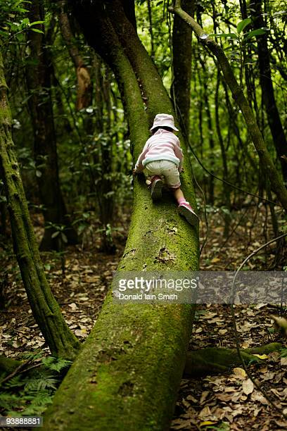 five year old girl climbs tree, new zealand. - マナワツ ストックフォトと画像