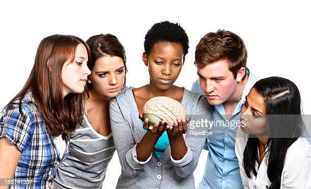 Five young people look seriously at model brain