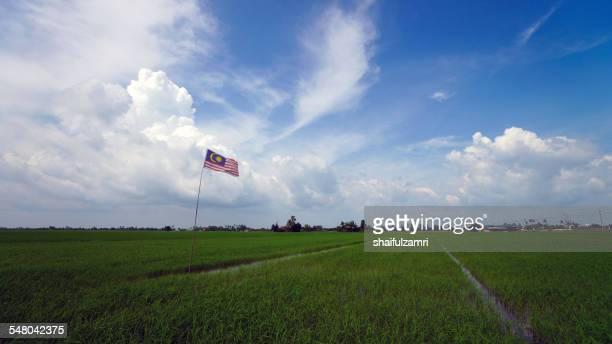 flag at paddy field - shaifulzamri stock pictures, royalty-free photos & images