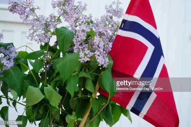 flag by blooming flowers - norwegian flag stock pictures, royalty-free photos & images