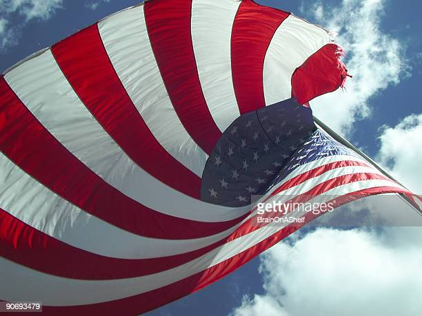 flag curl - 4th stock pictures, royalty-free photos & images