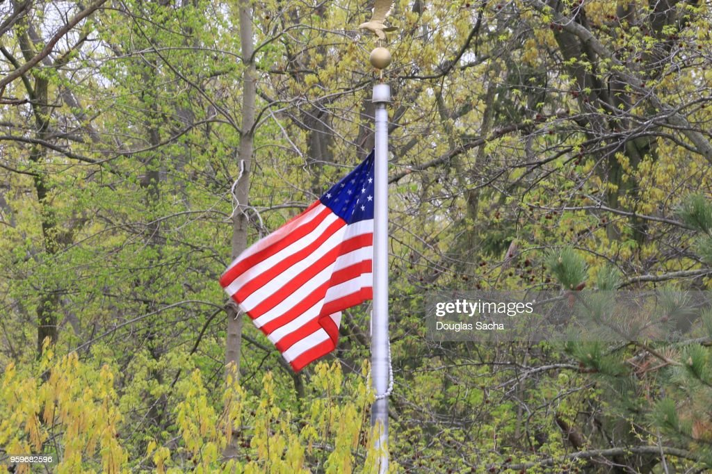 USA flag flying in a wooded area : Stock-Foto
