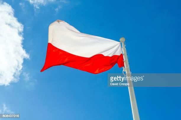 flag of poland - polen stock-fotos und bilder