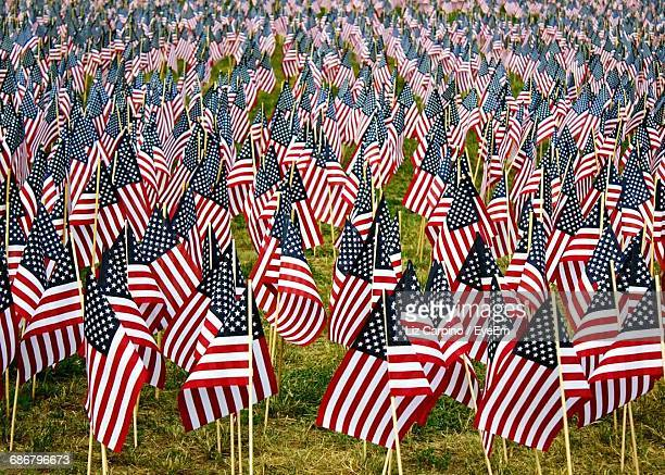 flags on grassy field during us memorial day - memorial day remembrance stock pictures, royalty-free photos & images