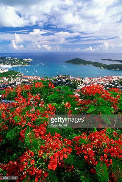 flamboyants overlooking harbor of st. thomas, virgin islands - paisajes de st thomas fotografías e imágenes de stock