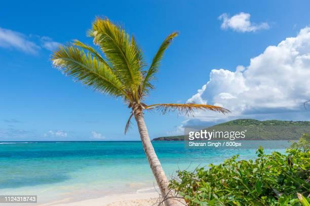 30 Top Flamenco Beach Pictures Photos