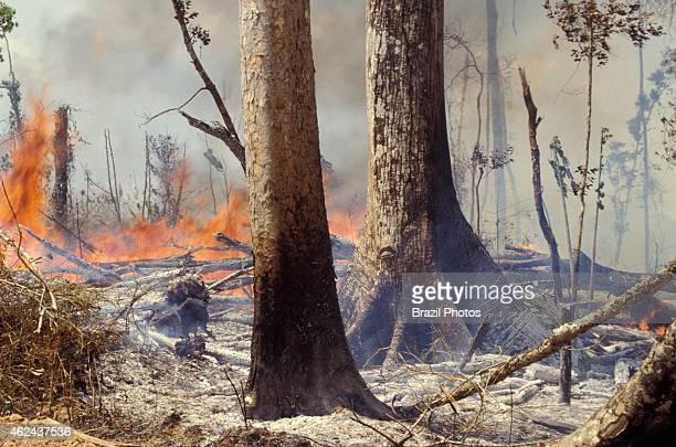 Flames and heat detail of Amazon rainforest burning environmental degradation caused by deforestation