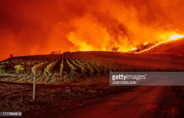 Flames approach rolling hills of grape vines during the Kincade fire near Geyserville California on October 24 2019 The fire broke out in spite of...