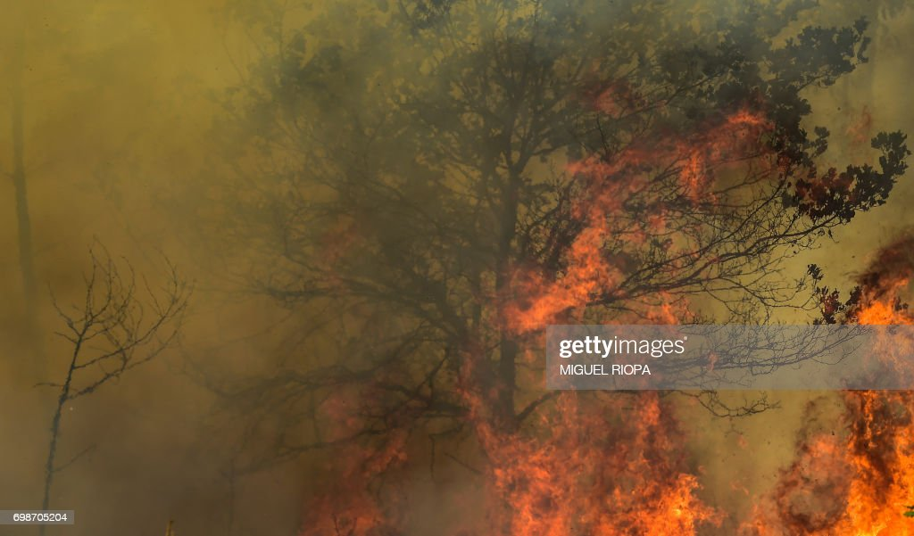 Flames burn a tree during a wildfire in Vale da Ponte, Pedrograo Grande, on June 20, 2017. The huge forest fire that erupted on June 17, 2017 in central Portugal killed at least 64 people and injured 135 more, with many trapped in their cars by the flames. RIOPA
