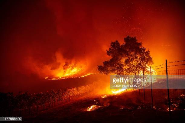 TOPSHOT Flames enter a vineyard during the Kincade fire near Geyserville California on October 24 2019 fastmoving wildfire roared through California...