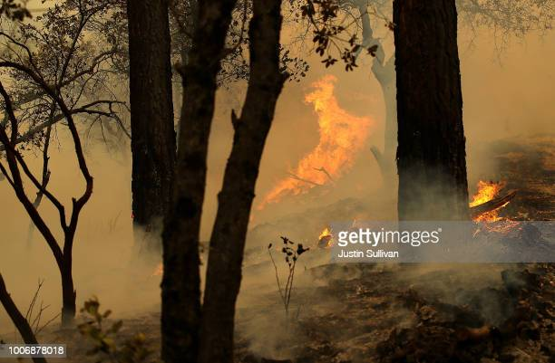 Flames from a backfire operation burn through trees ahead of the approaching Carr Fire on July 28 2018 in Redding California A Redding firefighter...