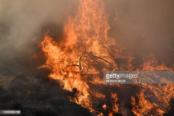 Flames from a wildfire burn a portion of Griffith Park in Los Angeles California November 9 2018 Staff at the Los Angeles Zoo which is located in the...