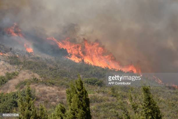 Flames from the Canyon 2 Fire burn tree and brush along the 241 freeway near Orange California October 9 2017 in Orange California / AFP PHOTO /...