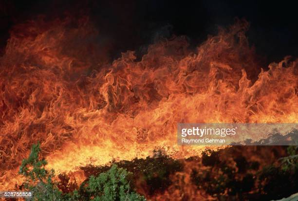 flames of a controlled fire - forest fire stock pictures, royalty-free photos & images