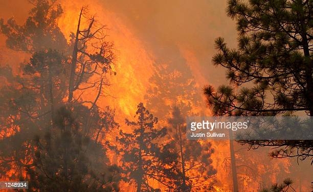 O'BRIEN OR AUGUST 4 Flames rip through the Siskiyou National Forest after Hot Shot fire crews lit a burnout fire August 4 2002 in O'Brien Oregon Fire...