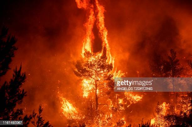 TOPSHOT Flames rise from a forest fire near the village of Makrimalli on the island of Evia northeast of Athens on August 13 2019 Hundreds of...