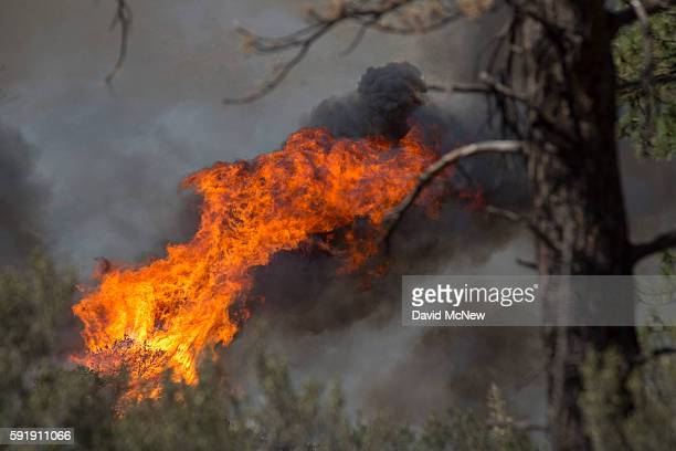 Flames spread through a remote section of the San Bernardino National Forest during the Blue Cut Fire on August 18 2016 near Wrightwood California An...