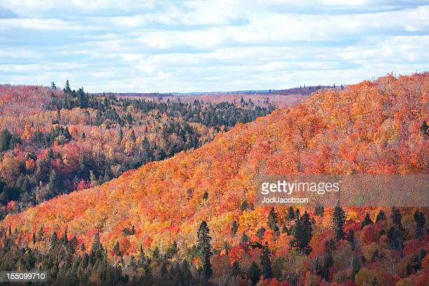 flaming fall foliage - north shore stock photos and pictures