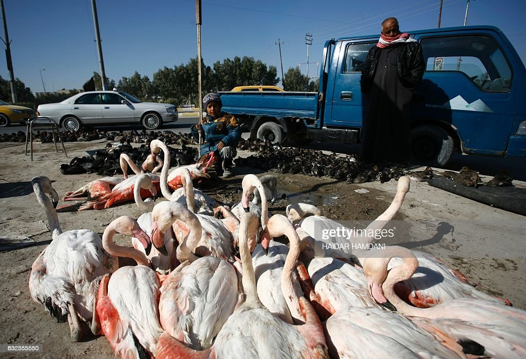 Flamingo birds are seen lined up for sale at a black market