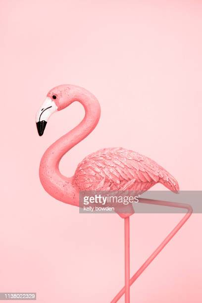 flamingo coral rose gold - flamingo stock pictures, royalty-free photos & images