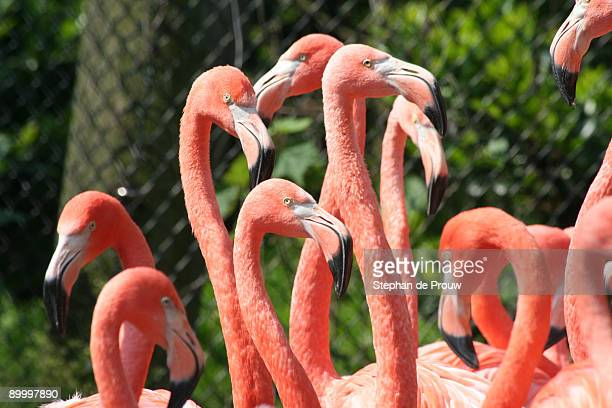 flamingo forest - stephan de prouw stock pictures, royalty-free photos & images