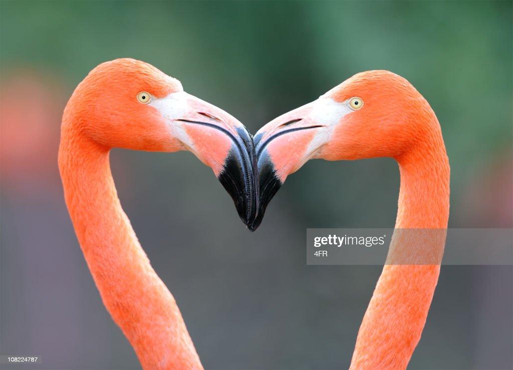 Flamingo Heart : Stock Photo