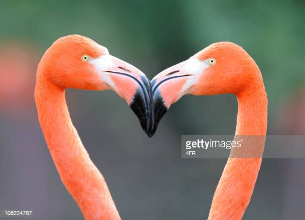 flamingo heart - flamingo stock photos and pictures