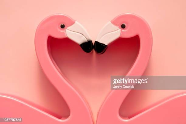 flamingo heart - flamingo heart stock pictures, royalty-free photos & images