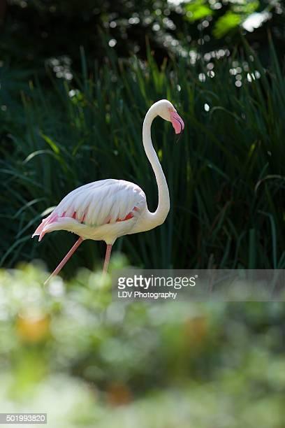 Flamingo Hunt