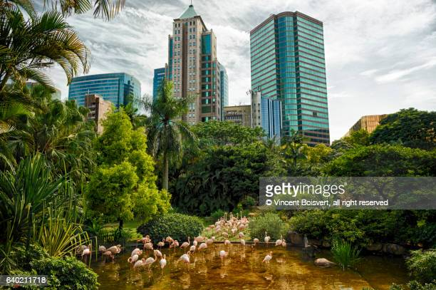 flamingo in kowloon park, hong kong, china - kowloon peninsula stock pictures, royalty-free photos & images