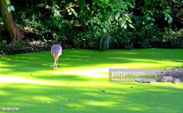 flamingo in pond against trees - aneta eyeem stock pictures, royalty-free photos & images
