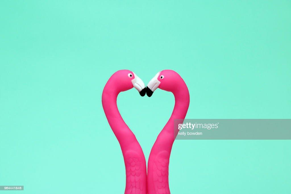 flamingo love heart friends kiss : Stock Photo