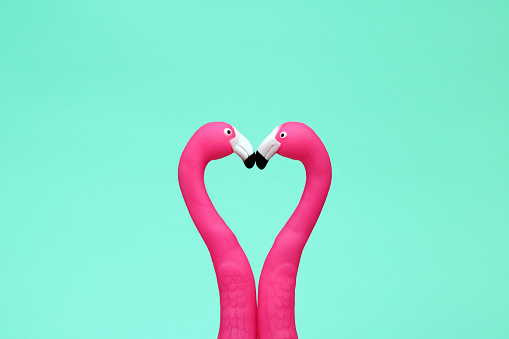 flamingo love heart friends kiss - gettyimageskorea