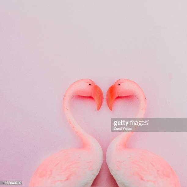 flamingo love in pink - flamingo heart stock pictures, royalty-free photos & images