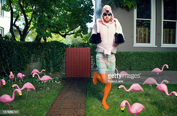 flamingo man lawn - flamingo stock photos and pictures