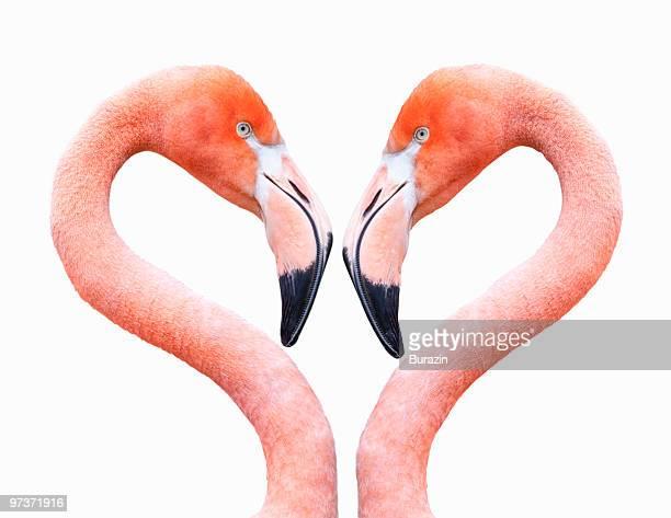 flamingo on white background - flamingo heart stock pictures, royalty-free photos & images