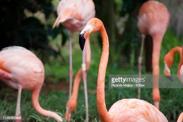 flamingo - zone d'exclusion aérienne photos et images de collection