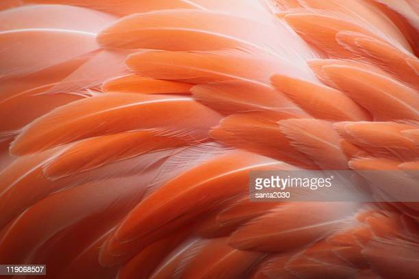flamingo - feather stock pictures, royalty-free photos & images