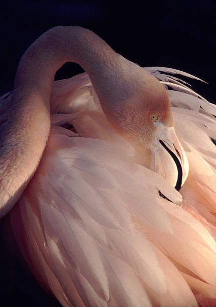 Flamingo Wall Art