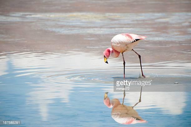flamingo - laguna fotografías e imágenes de stock